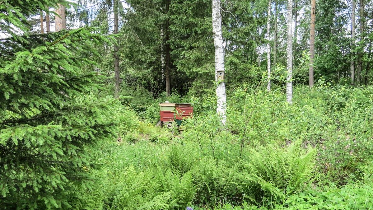 Mehiläispesä Katriina Laukkasen pihalla.