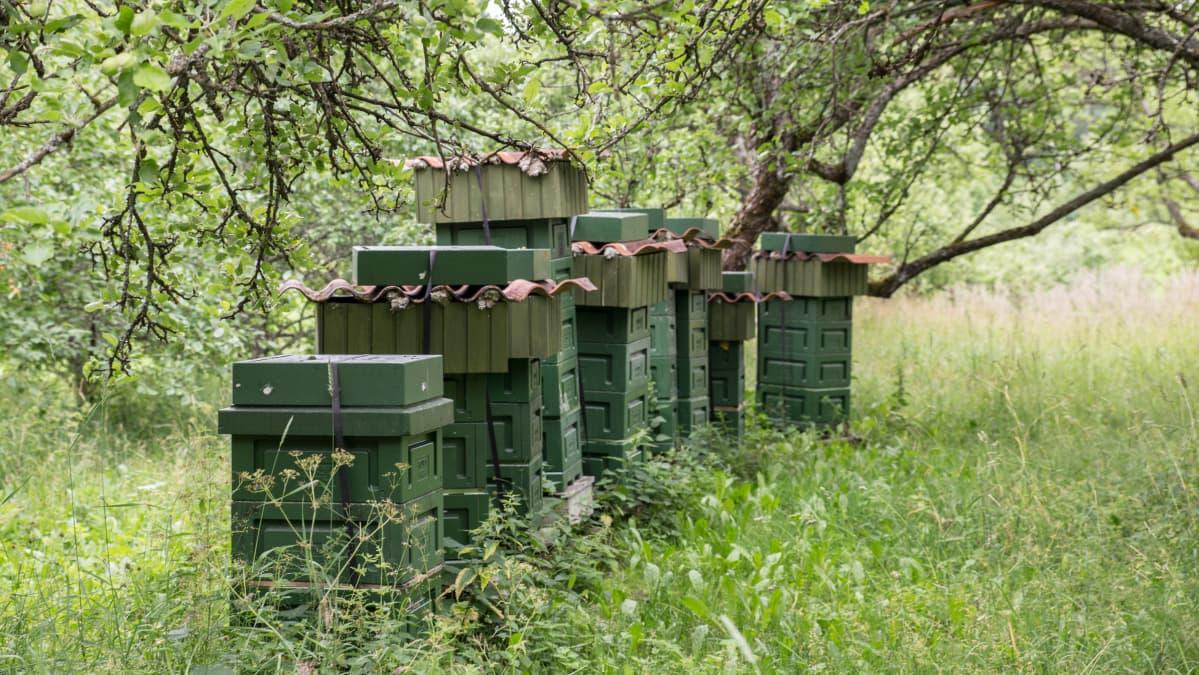 Mehiläispesiä omenapuiden alla.