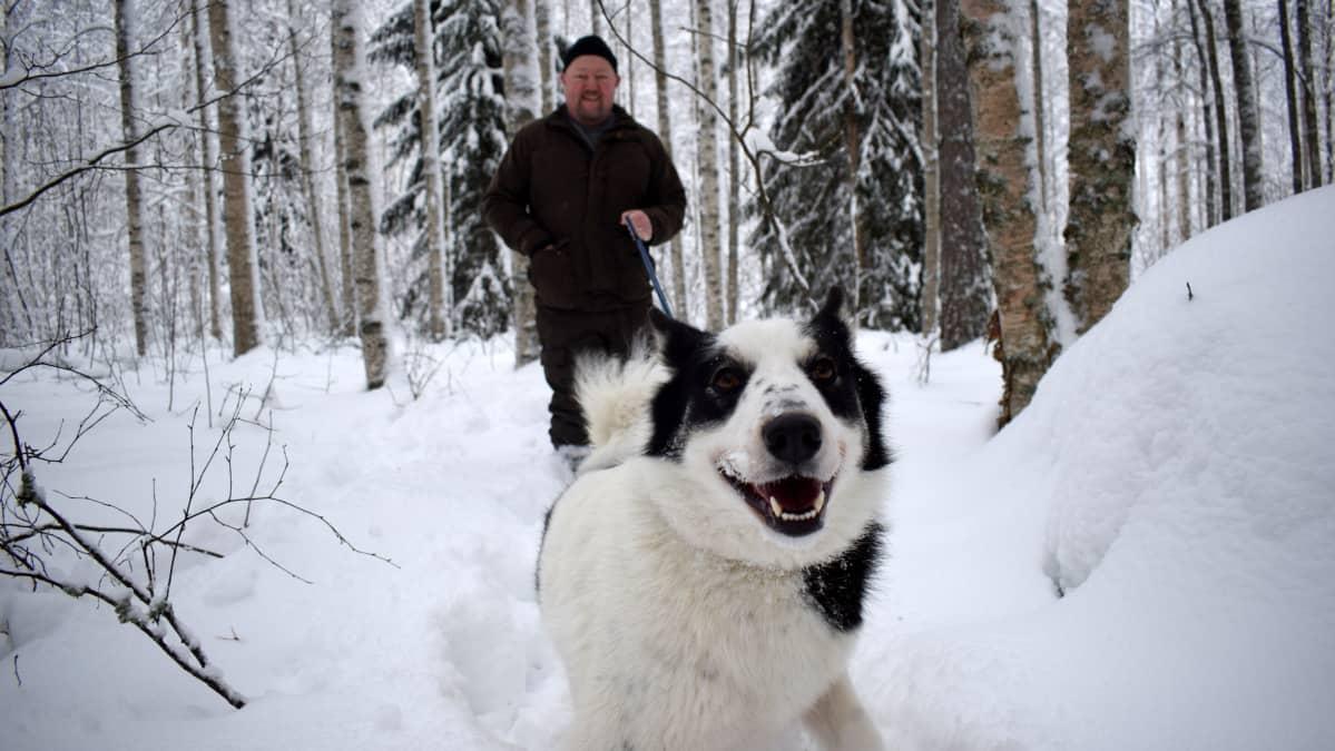 Jani Hotanen taluttaa  koiraansa lumisessa metsässä.