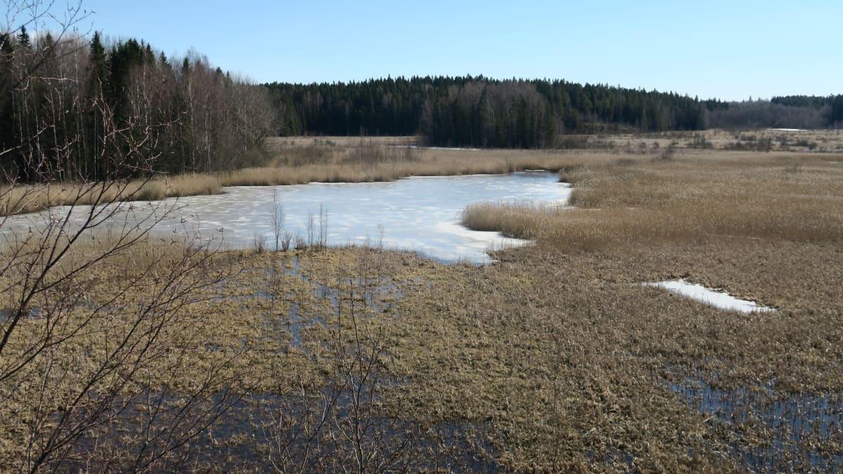 Koijärvi huhtikuussa 2019