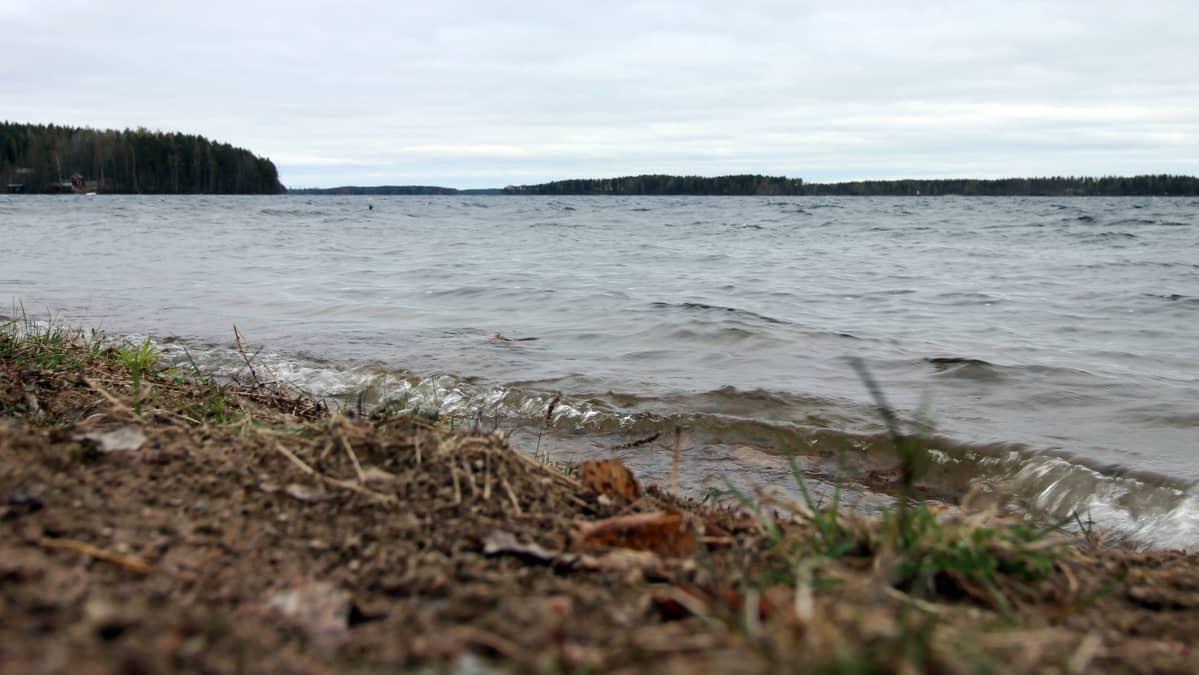 Vuohijärven rantaa.
