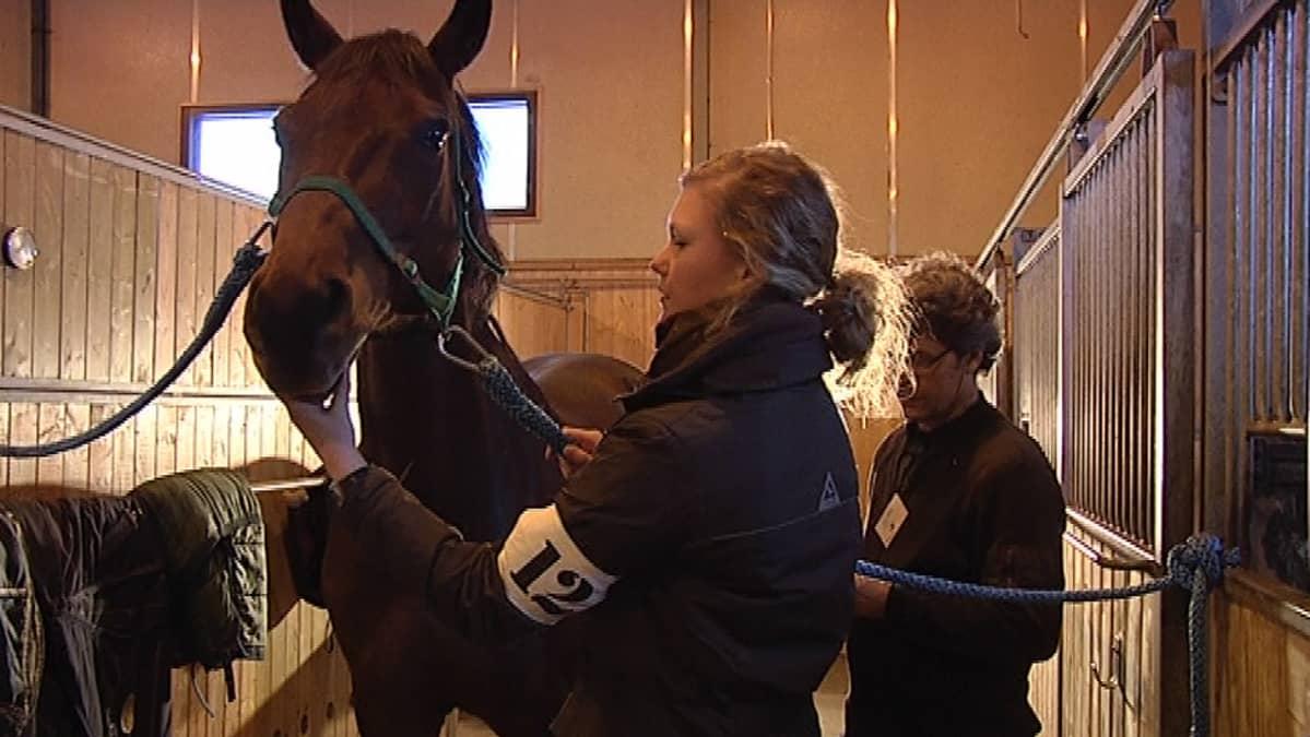 Opiskelija tarkastaa hevosta Taitaja-kilpailun semifinaalissa.