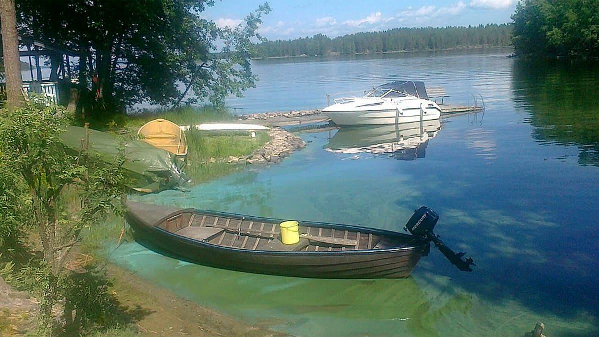 Levää rantavedessä Rautaniemessä Kuopiossa kesäkuussa 2011.
