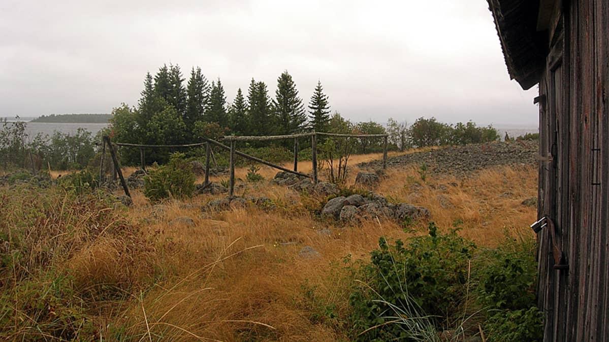 Perämeren kansallispuisto, Pensaskarin saari.