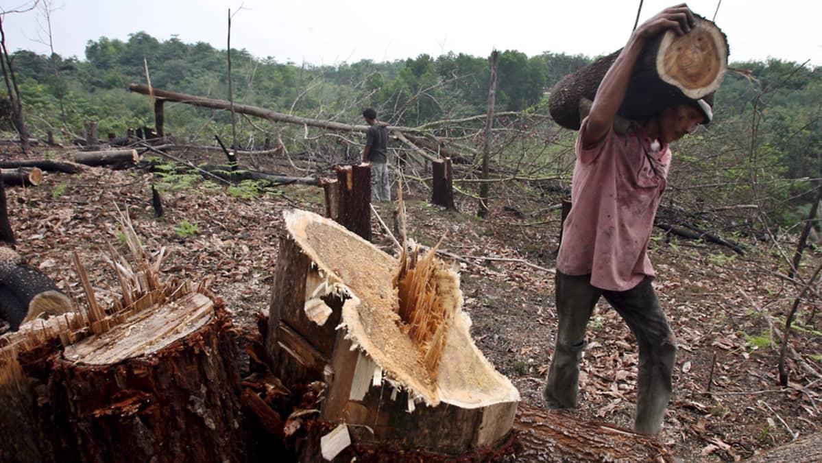 Hakattua metsää ja kyläläisiä kantamassa puuta sademetsän laidassa.