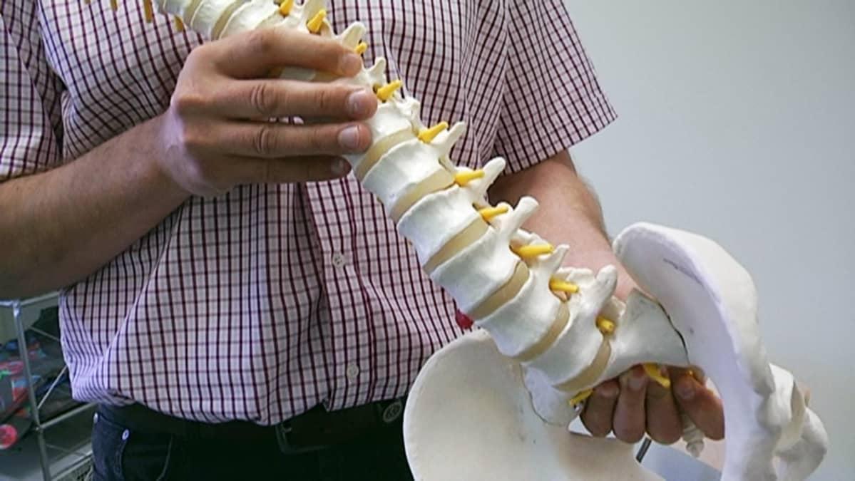 Fysioterapeutti pitelee selkärangan jäljitelmää.