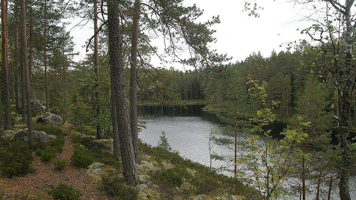 Patikkareittiä Hämeenlinnassa Evolla Kalliojärven rannalla