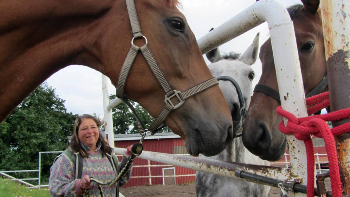 Anu Iivanainen ja Messilän Kartanon tallin hevoset ulkoilemassa.