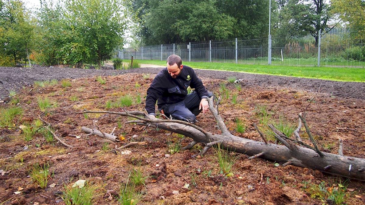 Puutarhuri Mikael Lindholm esittelee kasveja Kumpulan kasvitieteelliseen puutarhaan viime talvena siirretyllä suopalstalla.