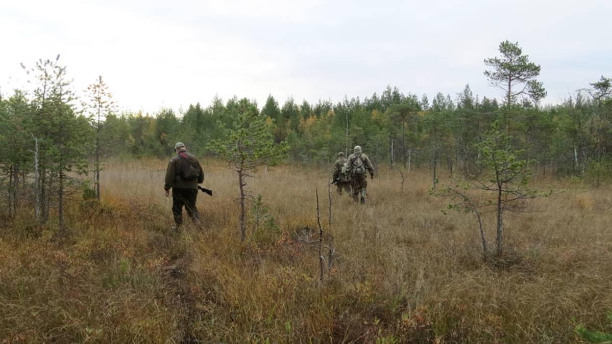 Metsästäjät liikkuvat maastossa.