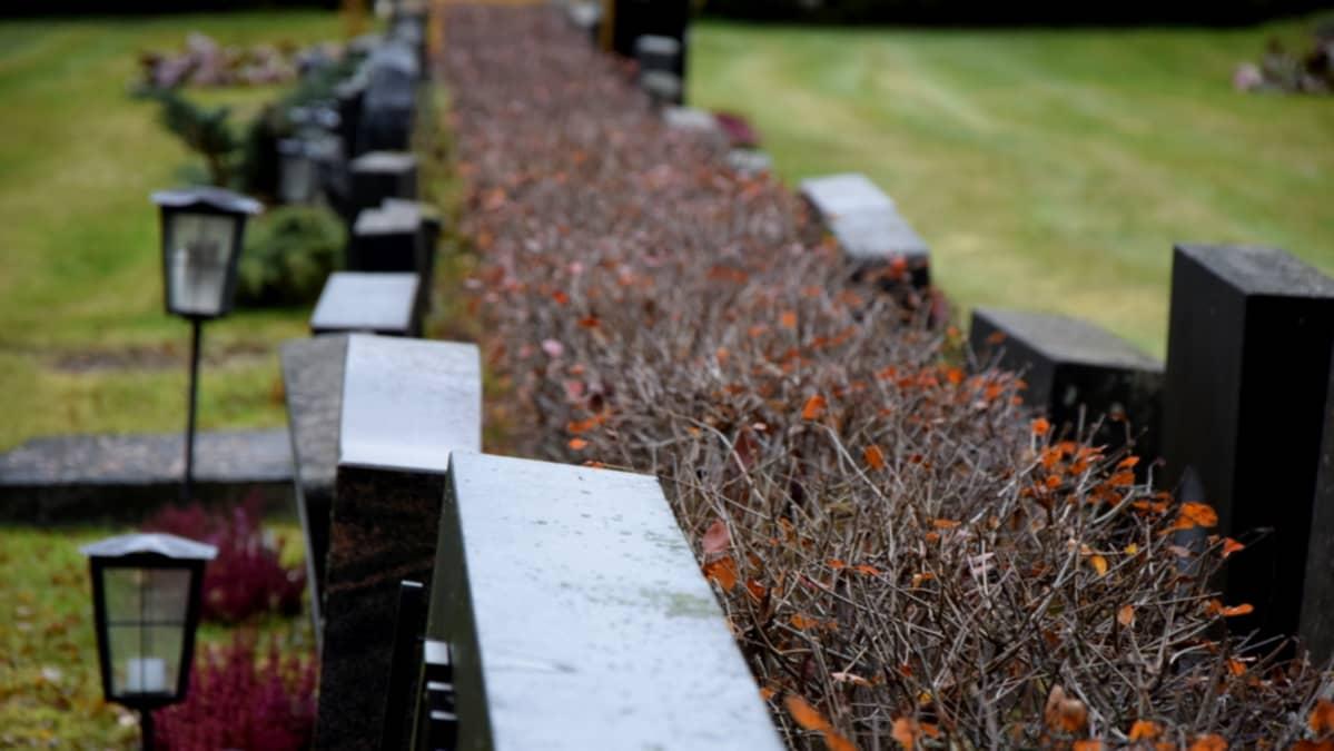 Hautausmaalla hautakiviä pensasaidan molemmin puolin