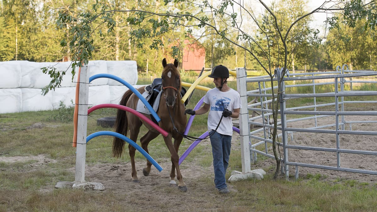 Hevonen ja ihminen tehtäväradalla.