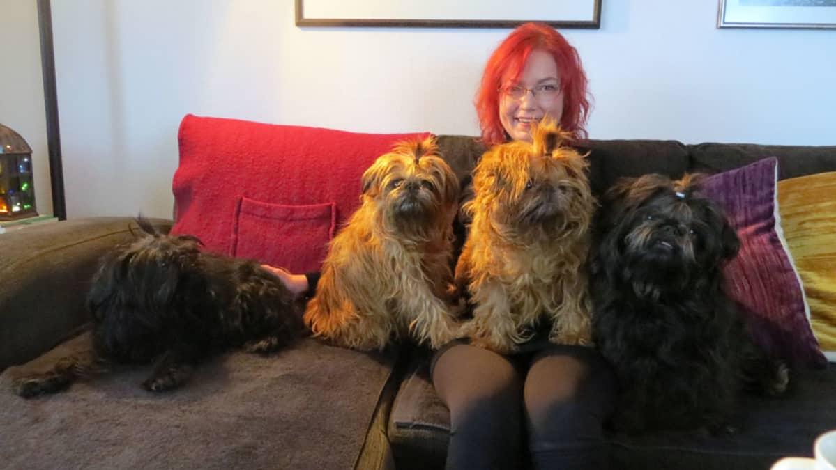 Eeva-Liisa Peltonen neljän griffon-rotuisen koiransa kanssa