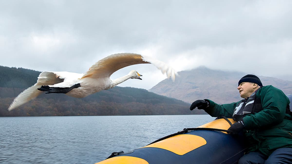 Kolmiosaisessa sarjassa David Attenborough kertoo lentävien eläinten historian.