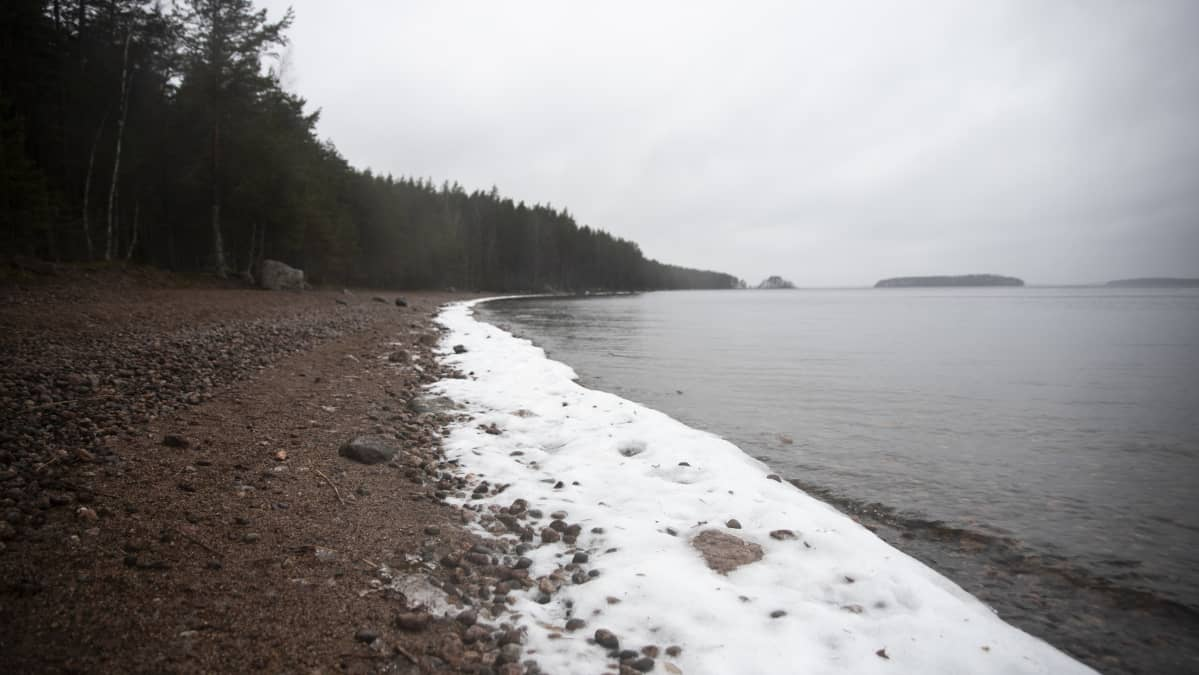 Sarviniemessä Saimaan rannalla.