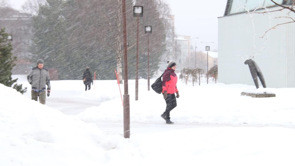 Lunta satoi tiistaina sakeasti Rovaniemellä