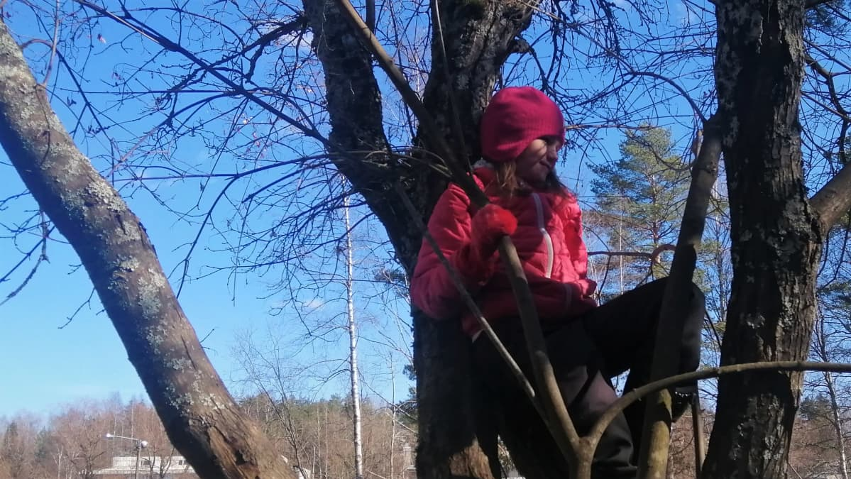 Etäopetuksessa oleva Maiju Halme on kiivennyt välitunnilla puuhun