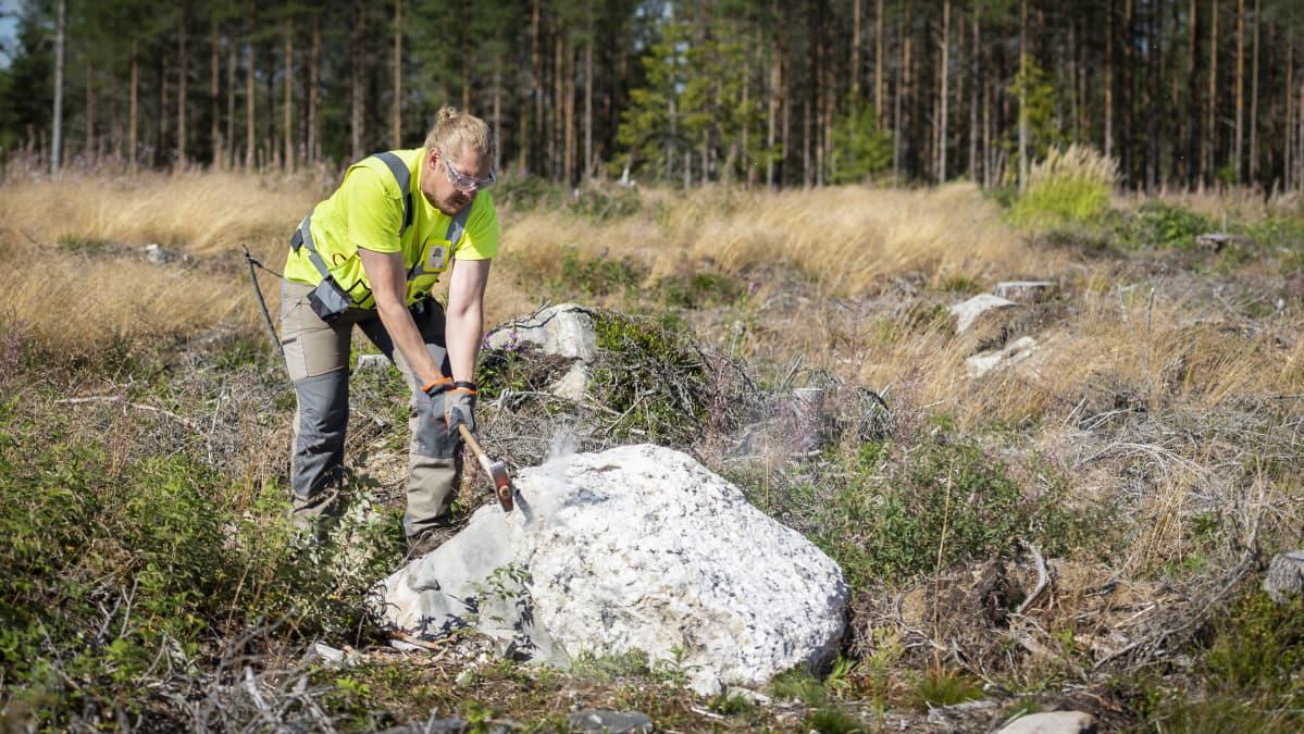 Henrik Nygård lyö hakkuuaukiolla olevaa kiveä hakulla.