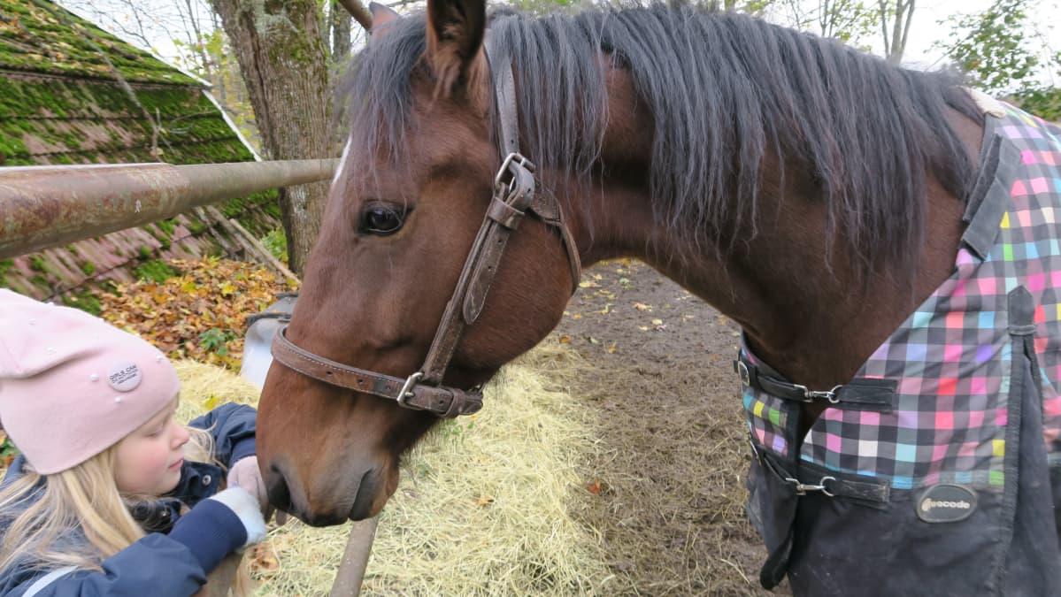 Hevonen nuuskii pikkutytön hansikasta aidanraosta.
