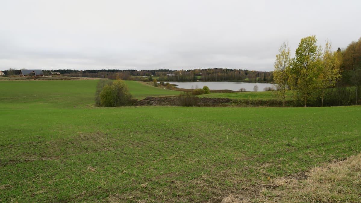 Vesistöön päin kallistuva peltoaukea Länsi-Uudellamaalla.