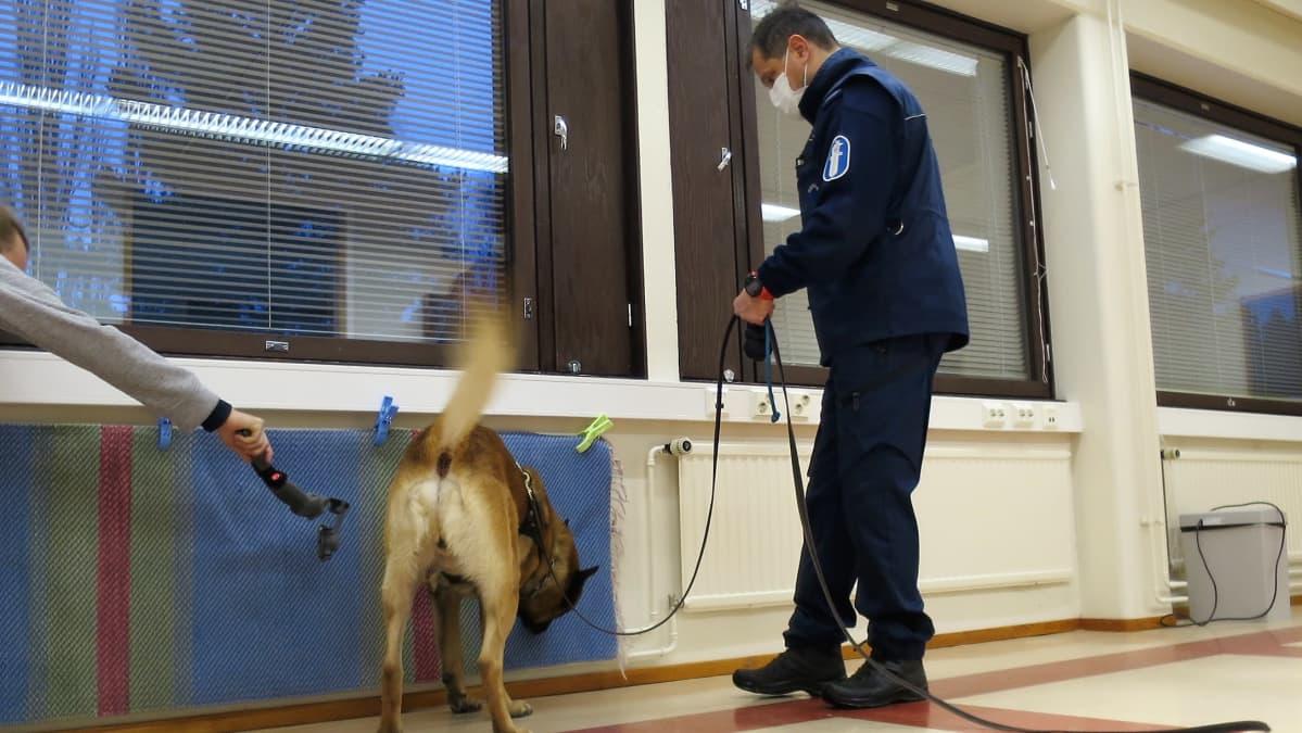 Poliisikoira haistelee mattoa luokkahuoneessa