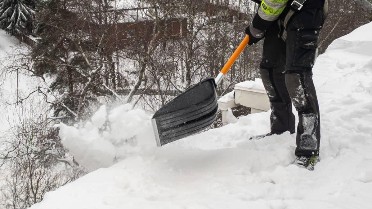 Lumenpudottaja heittää lunta katon reunan yli.
