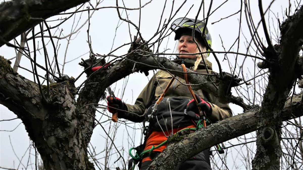 Pauliina Timoska leikkaa puun oksia.