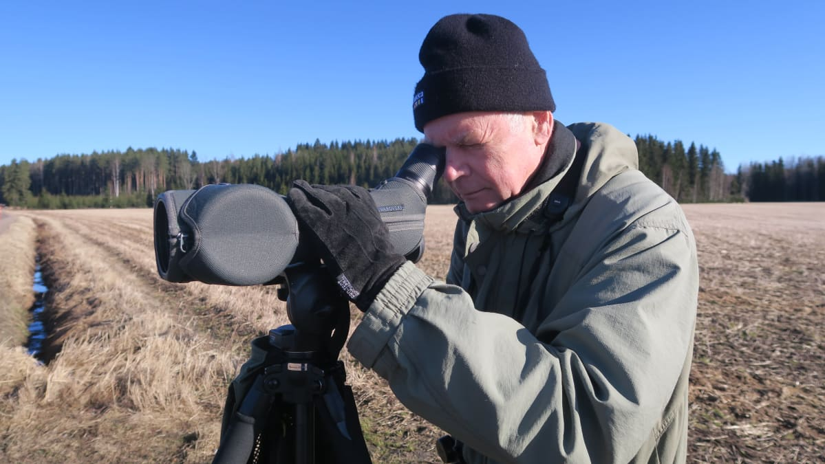 Martti Heikinheimo tarkkailee muuttavia hanhia