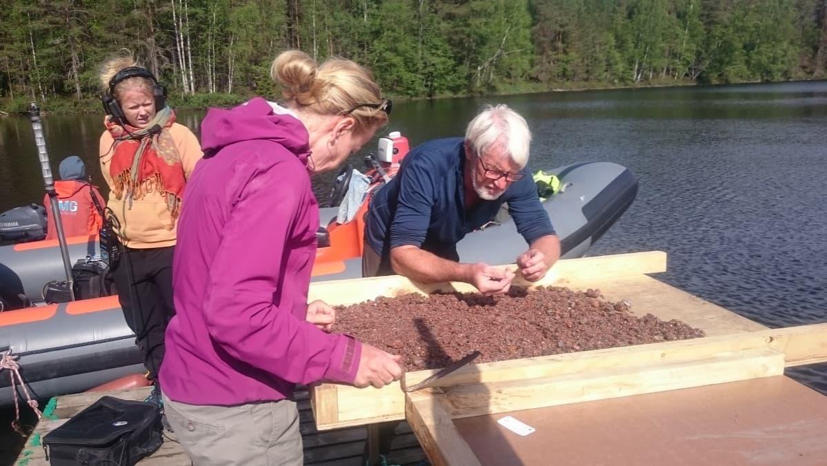 Tutkijat tutkivat järven pohjasta kaivettua sedimenttiä