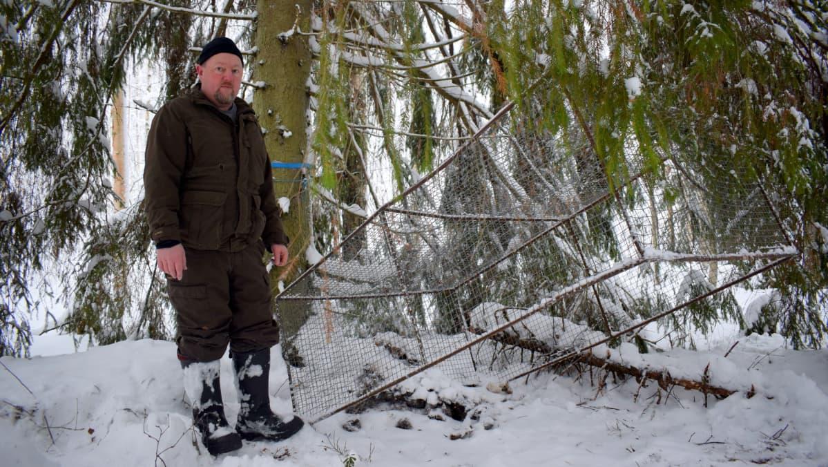 Metsästäjä Jani Hotanen seisoo supiloukun vieressä lumisessa metsässä suuren kuusen juurella.