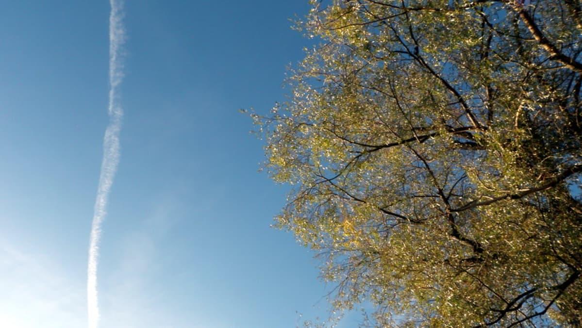 Syksyinen puu ja suihkukoneen jälki taivaalla.