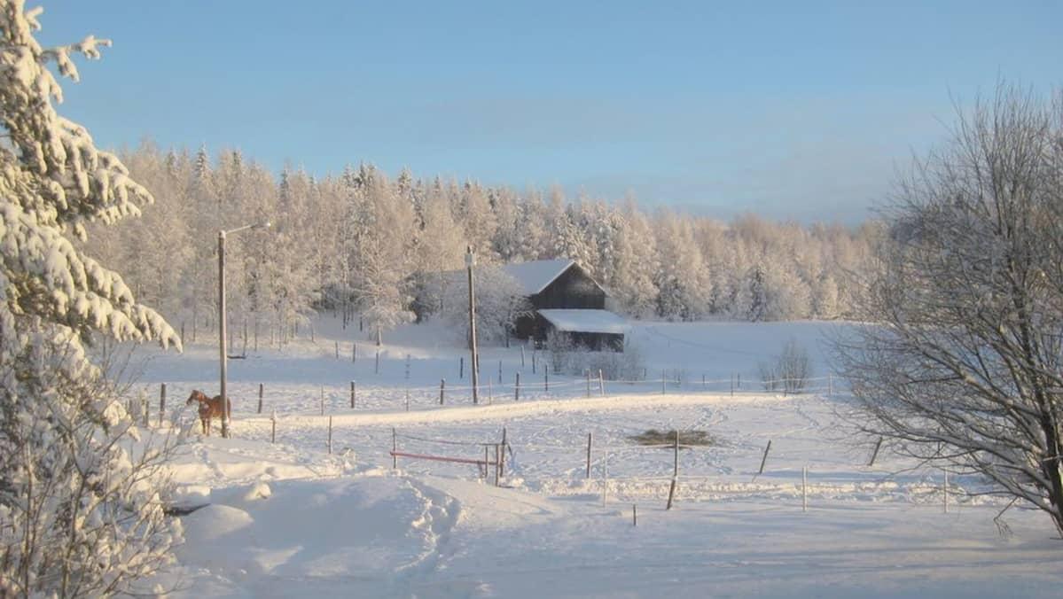 Talvimaisema Kiihtelysvaarasta.