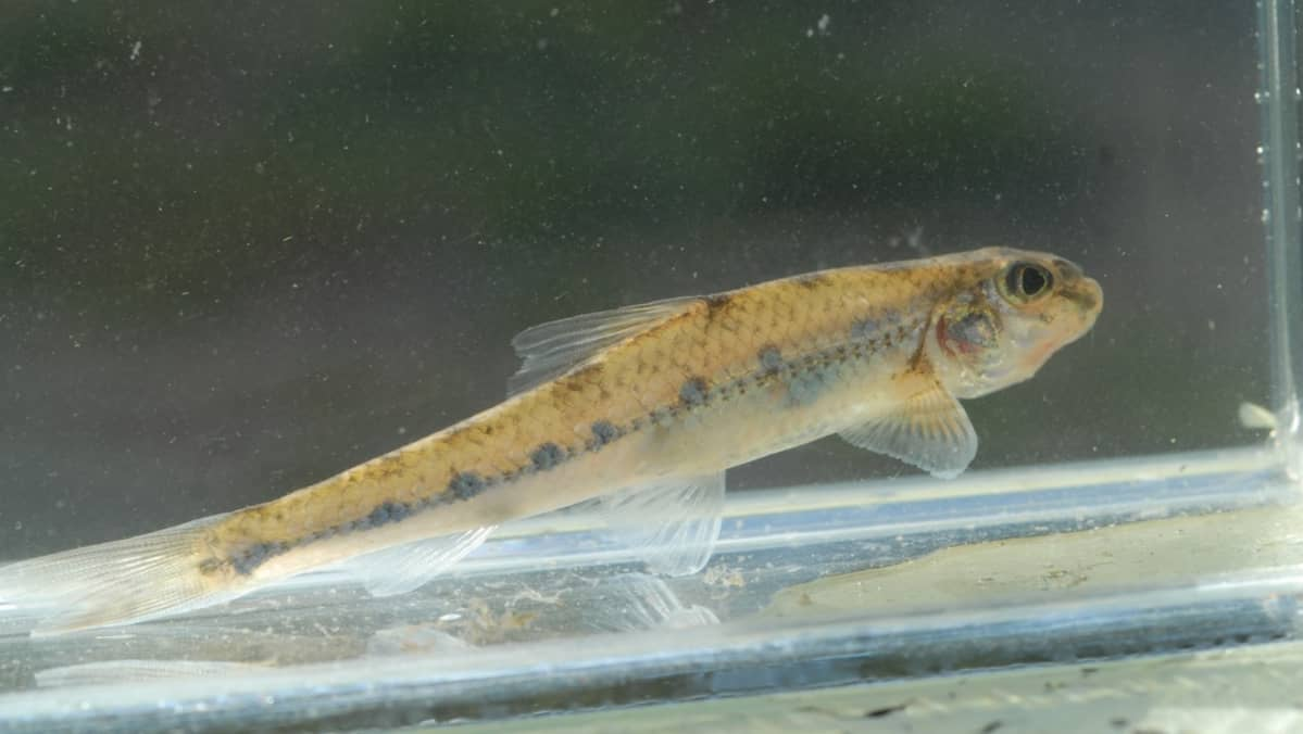 kala kytkennät