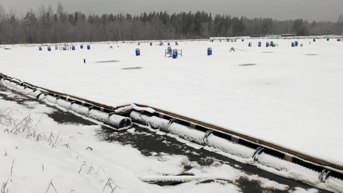 Krasnyj Borin altaita joulukuussa 2017