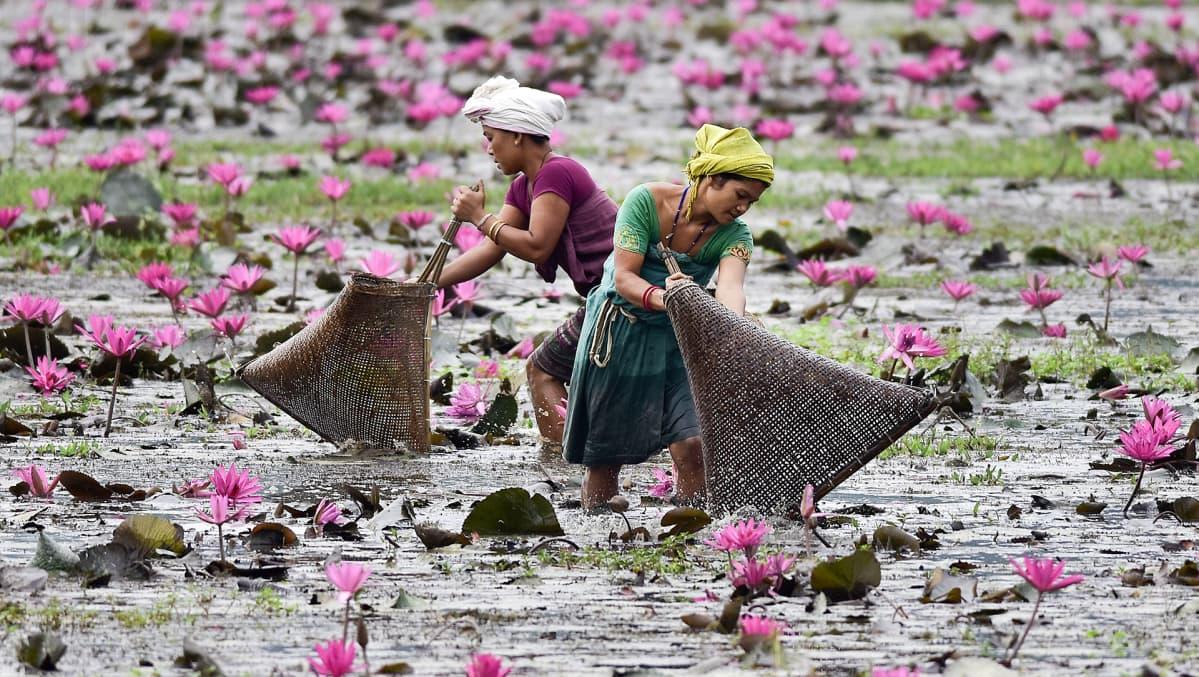 Naiset pyytävät kalaa lootuskukkien kukkiessa vedessä.