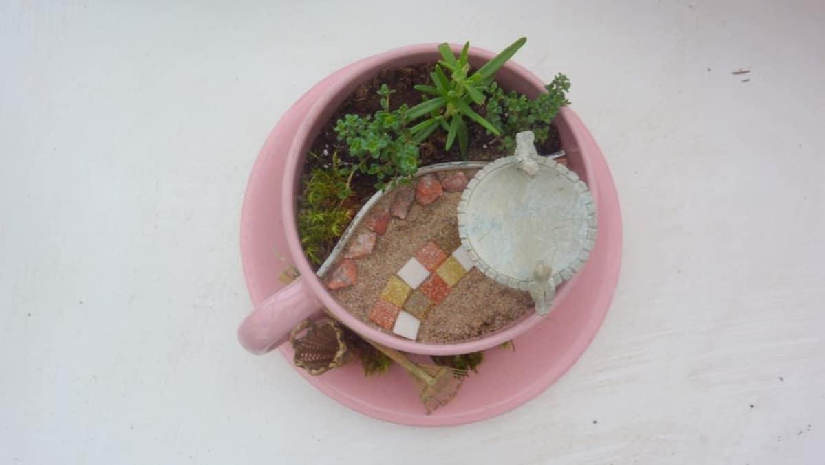 Riitta Koskisen miniatyyripuutarha mahtuu teekuppiin.