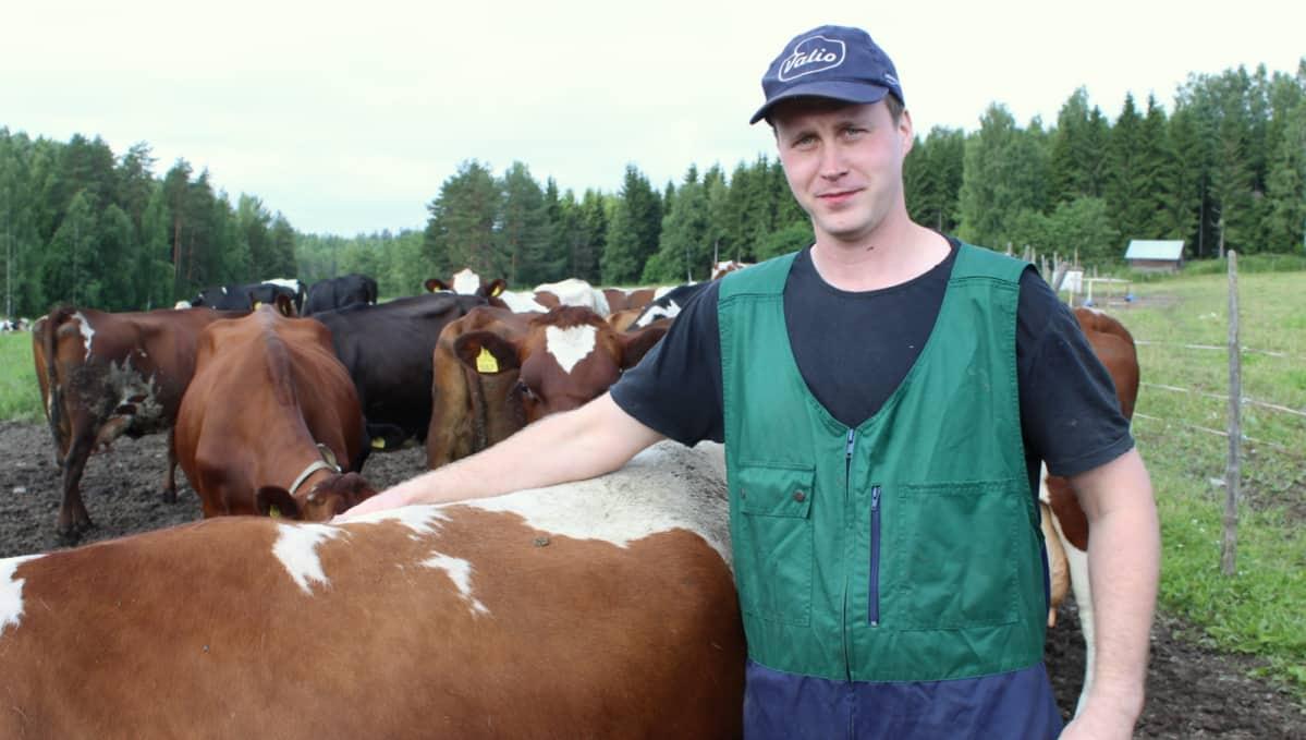 maidontuottaja Tuomo Siljanen lehmien keskellä