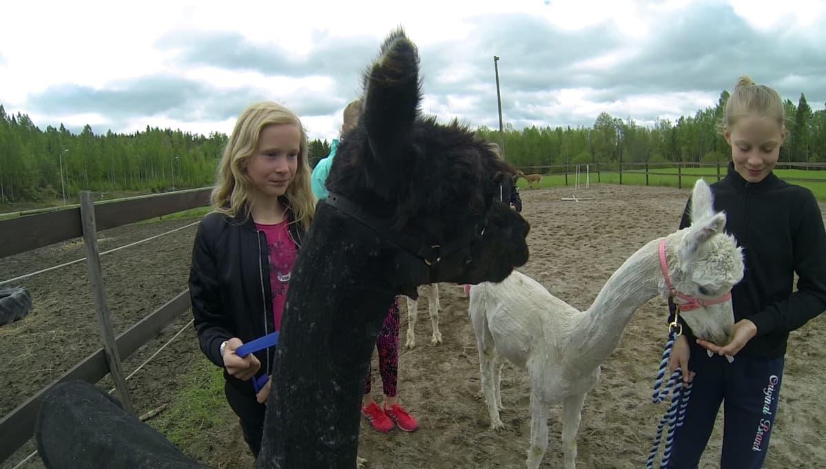 Alpakka-agility -innostus on purrut myös muihin kuin Tarhosen tyttöihin. Kuvassa Jenna Jaakkola sekä Tarhosen nuorempi tytär Inka.
