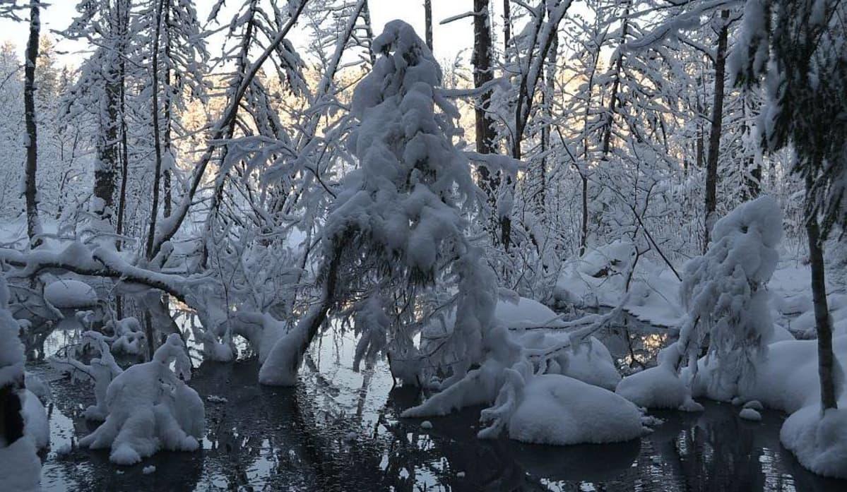 Karvalammin lähteen vesi virtaa sulana kovallakin pakkasella Evolla Hämeenlinnassa