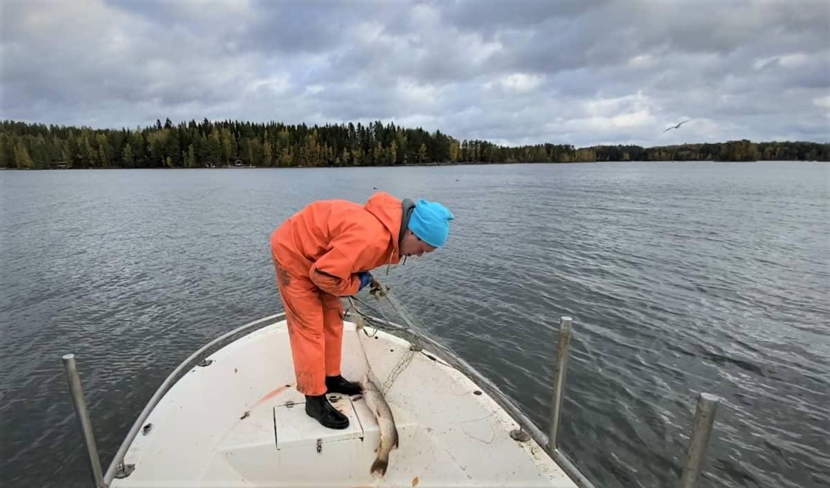 Mies nostaa verkkoa veneeseen