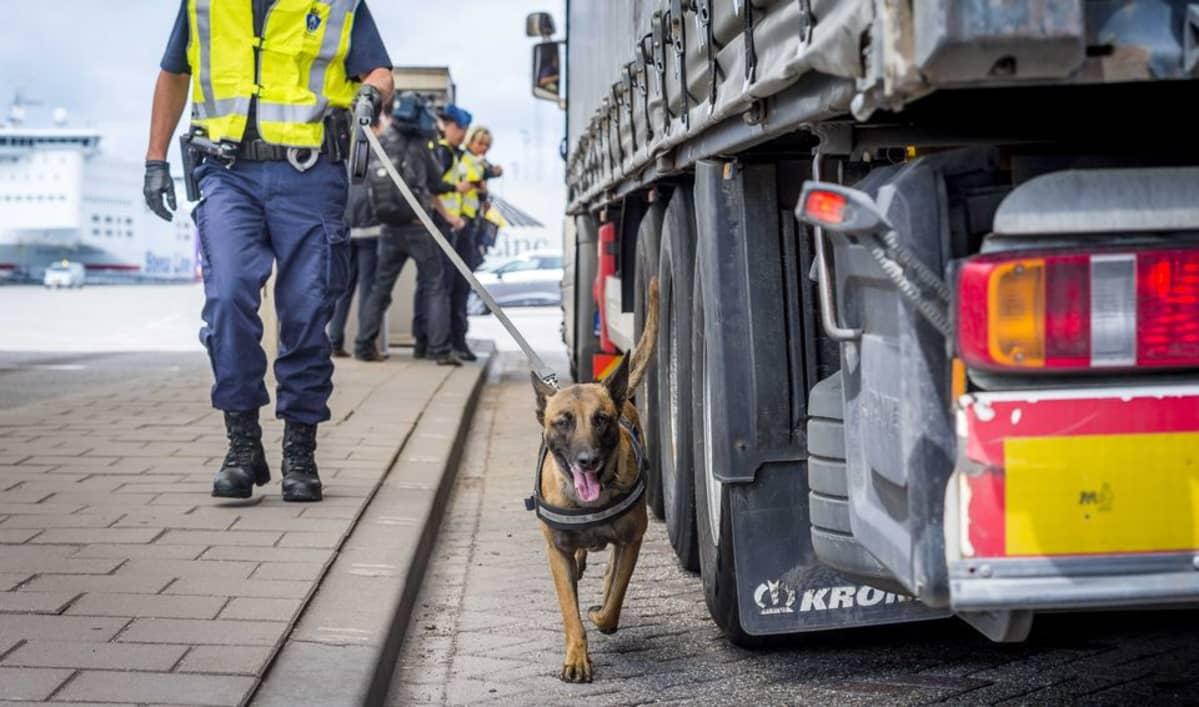 Hollantilaispoliisi tarkastaa Kanaalin ylitse matkalla olevia rekkoja salamatkustajien varalta