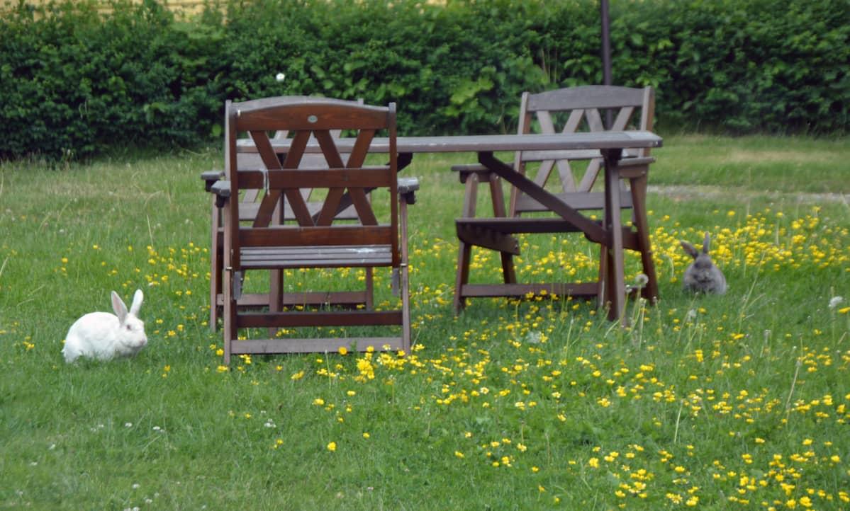 Citykanit Noppa ja Halla puutarhapöydän vieressä
