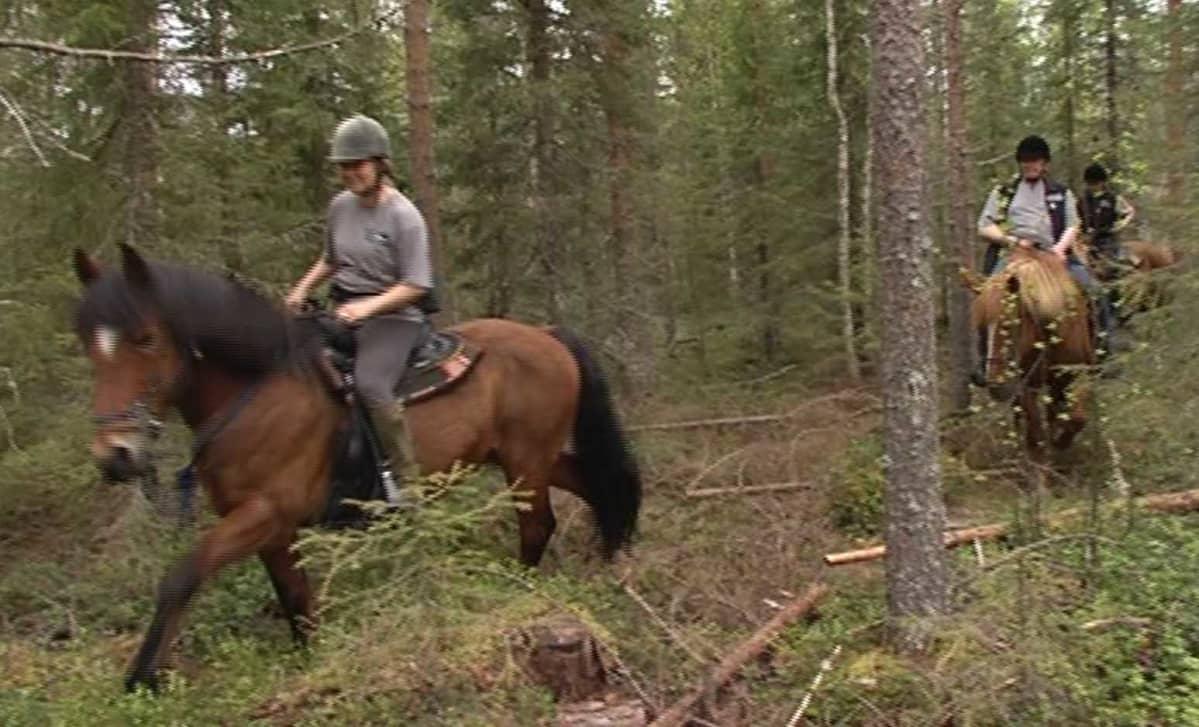 Pisan eräratsut, eräratsastus, Rovaniemi