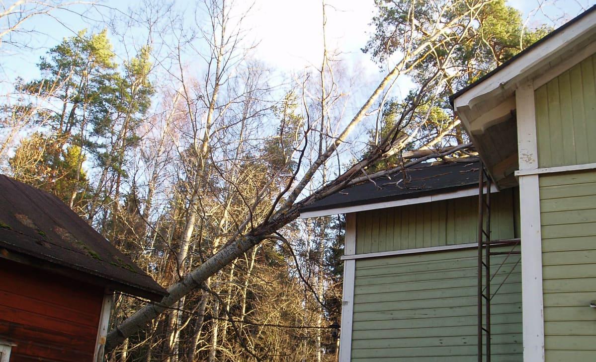 puu on kaatunut talon päälle