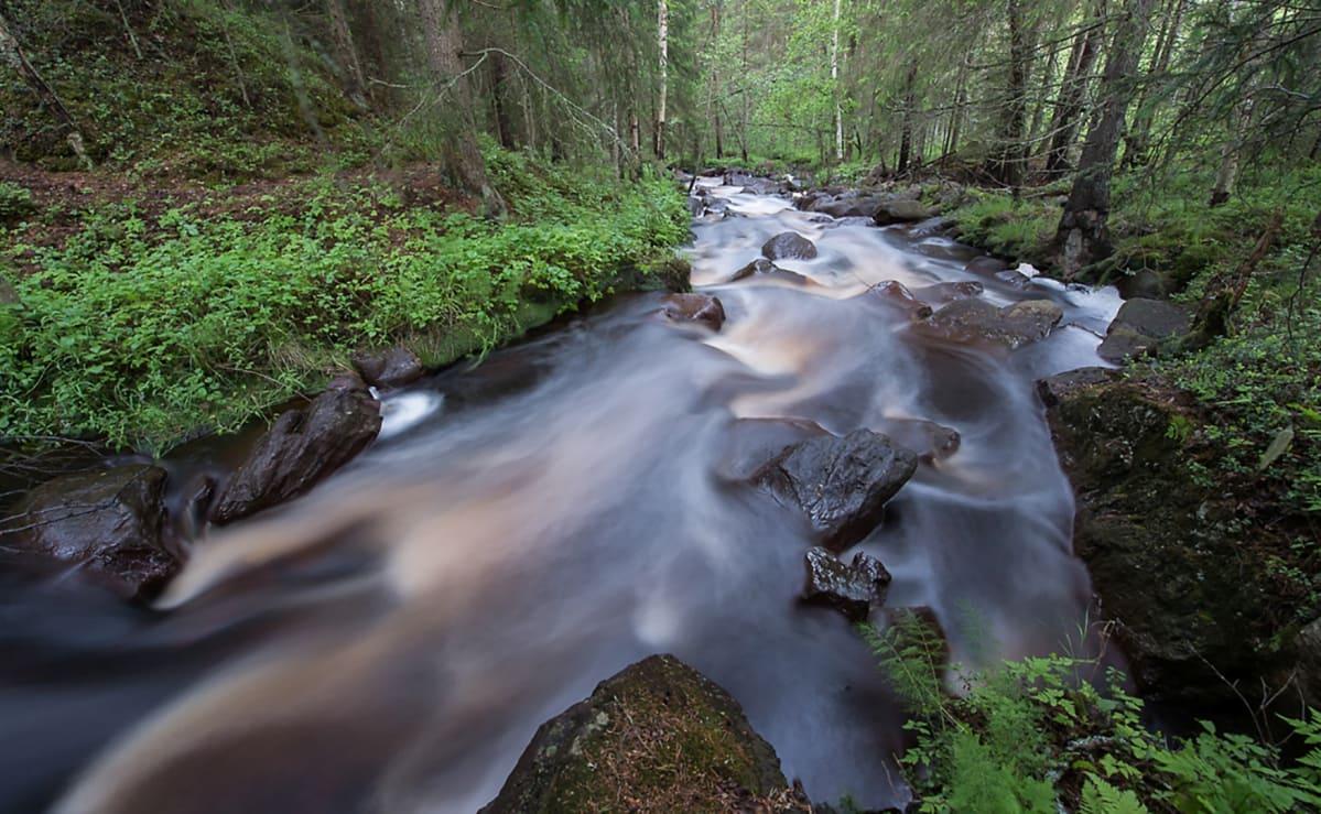 Virtaava puro metsässä