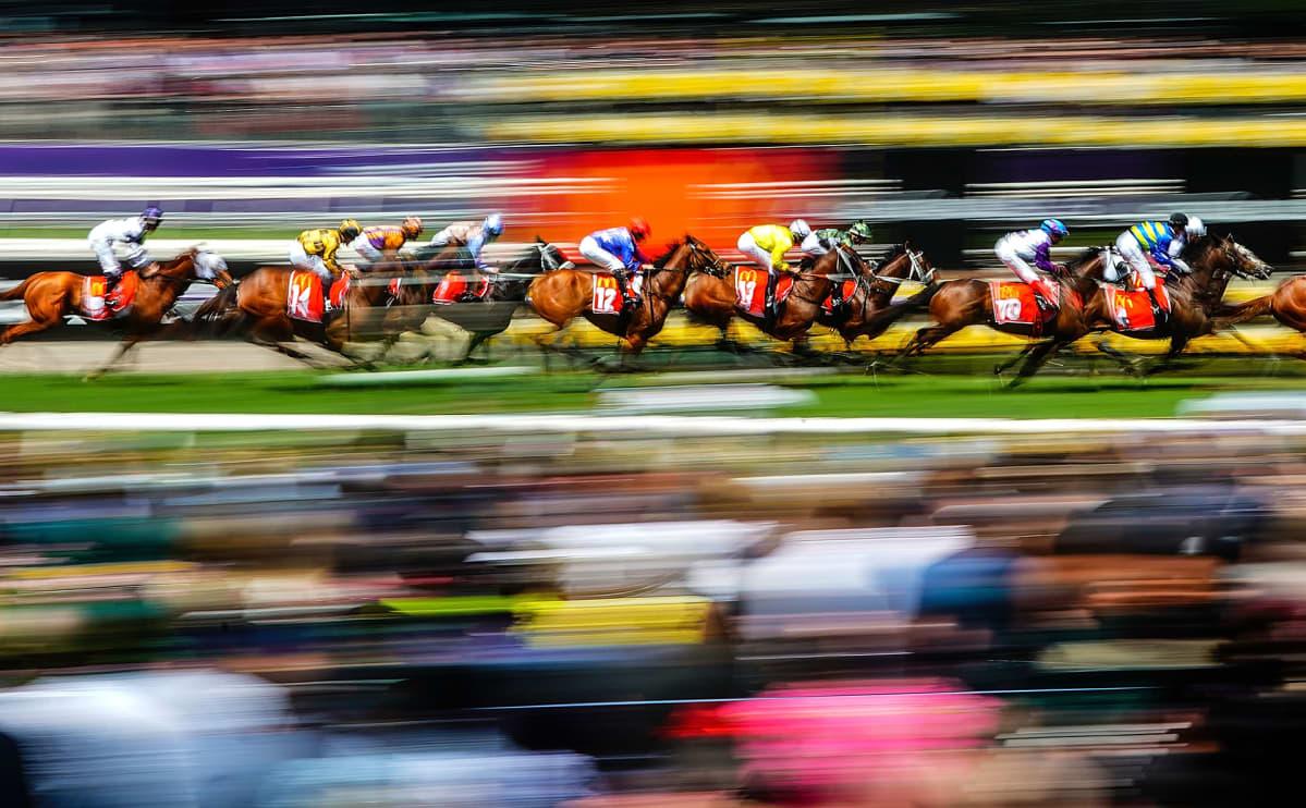 Hevosia laukkakisassa