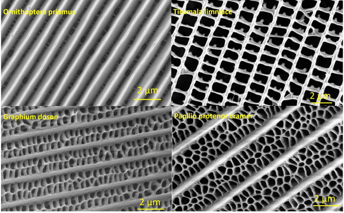 Kuvassa on eri perhoslajien siipien nanorakenteita.