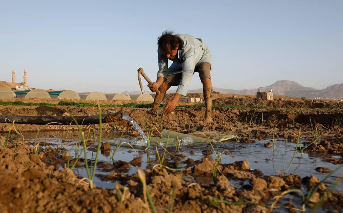 Maanviljelijä Jemenissä.