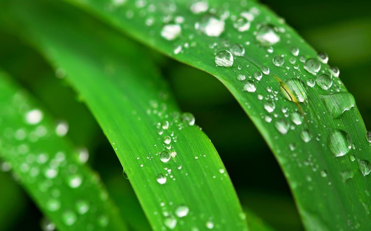 sadepisaroita lehdellä