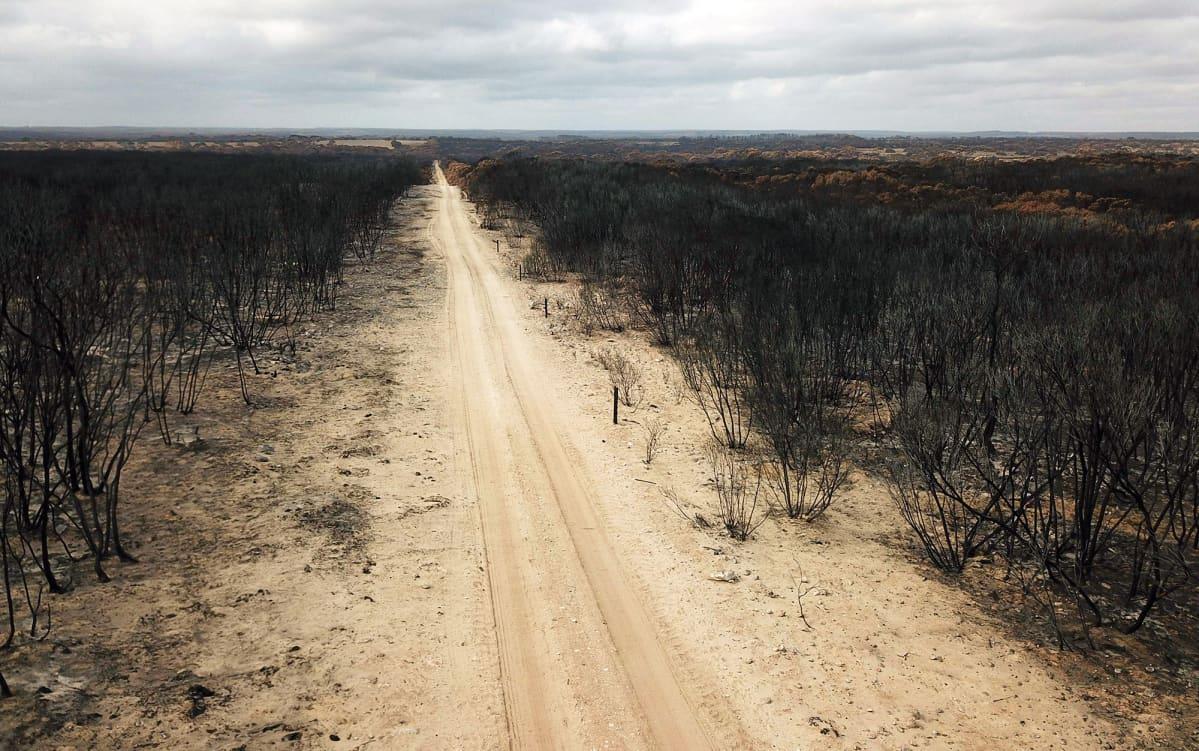 Australian palanutta maastoa.